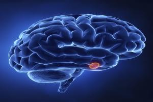 Pituitary Gland Tumors - Effects on Health and Treatment Options